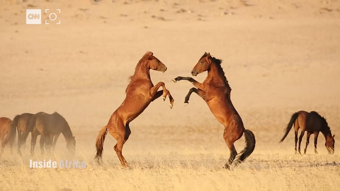 Time Is Running Out For Namibia S Wild Horses Cnn Video