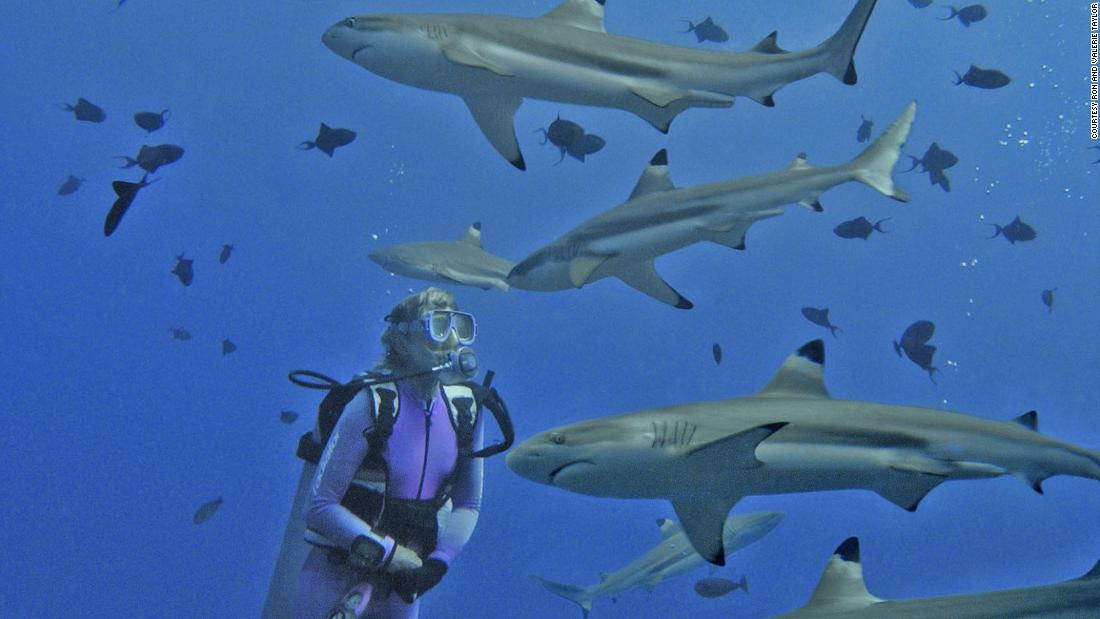 Valerie Taylor has been bitten twice and nipped once by sharks in 40 years of diving with them -- without permanent injury.