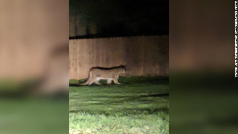 Child escapes cougar attack in Washington