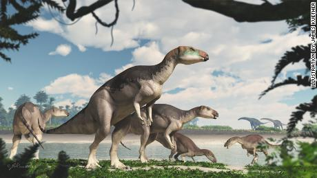 Dinosaur bones shimmering with opal reveal a new species
