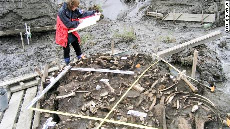 DNA was extracted from two 31,000-year-old teeth found near the Yana river in Russia, as well as a 10,000-year-old skull found near Siberia's Kolyma river.