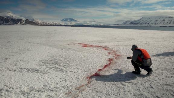 Traces of a polar bear kill.