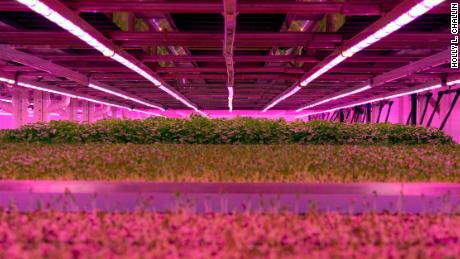 Ocado is getting into the vertical farm business.