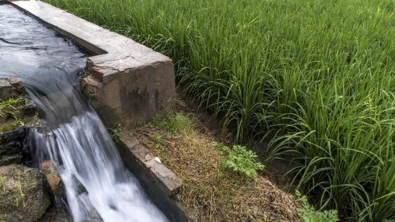 Water pours down an irrigation channel from a groundwater pump and well next to a field of rice growing on farmland in the Bhagpat district of Uttar Pradesh, India, on Monday, Sept. 3, 2018. Cumulative rainfall during August and September is forecast to be 95 percent of a 50-year average, according to the India Meteorological Department. The monsoon is critical to the farm sector as it accounts for more than 70 percent of India