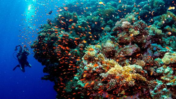 "Also known as ""rainforests of the sea"", coral reefs offer spectacular sights, as well as supporting wildlife, providing food, jobs and coastal protection for an estimated 500 million people.   But human activities are threatening their survival. Scroll through the gallery to see how our actions are putting coral reefs at risk."