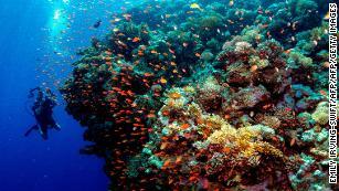 As fazendas de corais podem salvar nossos recifes?