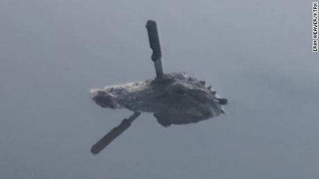 An alligator is swimming in a Texas lake with a knife in its head