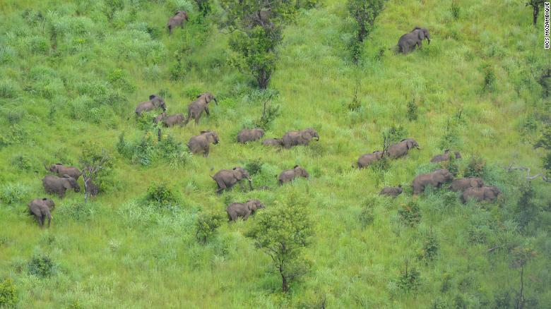 Elephants on the Niassa reserve.
