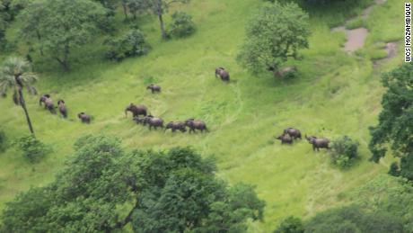 A herd of elephants as seen from the air in Mozambique.