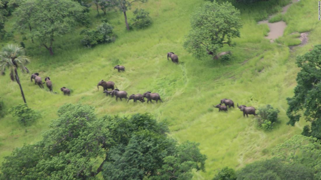 No elephants have been hunted in this African wildlife preserve in more than a year, officials say
