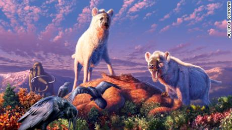 An artist's rendering of ancient Arctic hyenas belonging to the genus Chasmaporthetes