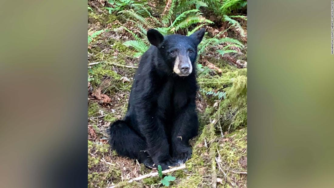 A friendly black bear was euthanized after it came to love people who fed it and took selfies