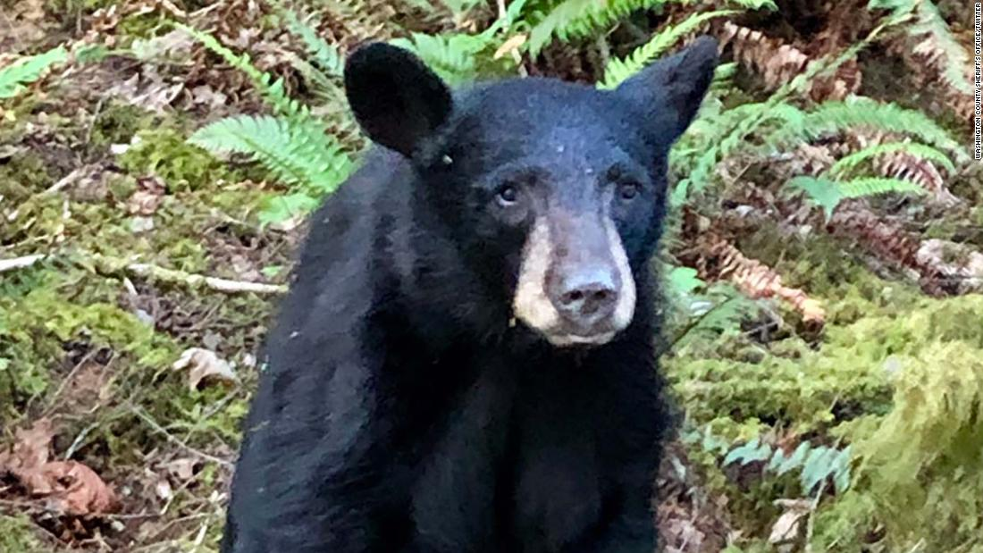 A friendly black bear was euthanized after becoming too familiar with people who fed it and took selfies