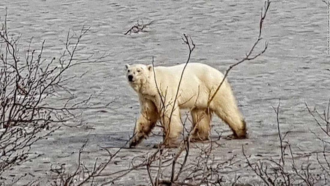 Man charged in Alaska for killing a polar bear and burning the body after letting it rot for 5 months