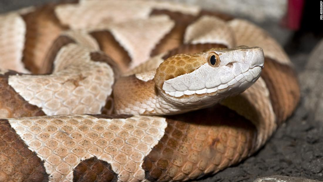 A Pennsylvania woman was bitten by a copperhead snake while doing laundry