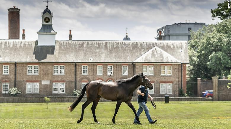 Goffs London Sale is a boutique race horse auction on the eve of Royal Ascot.
