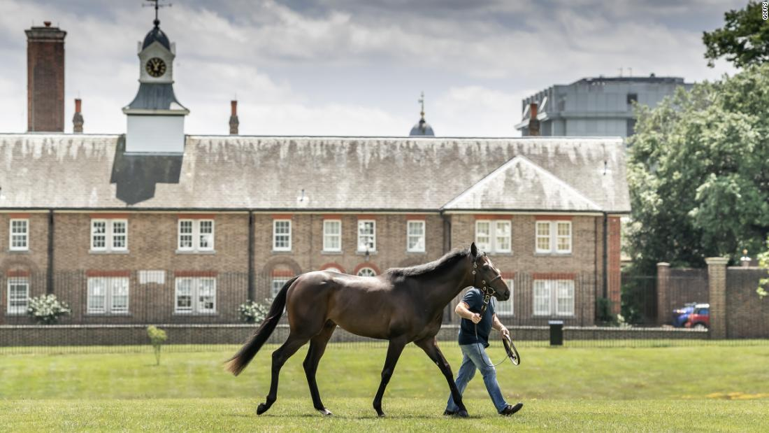 London's boutique horse sale in Prince William's back yard