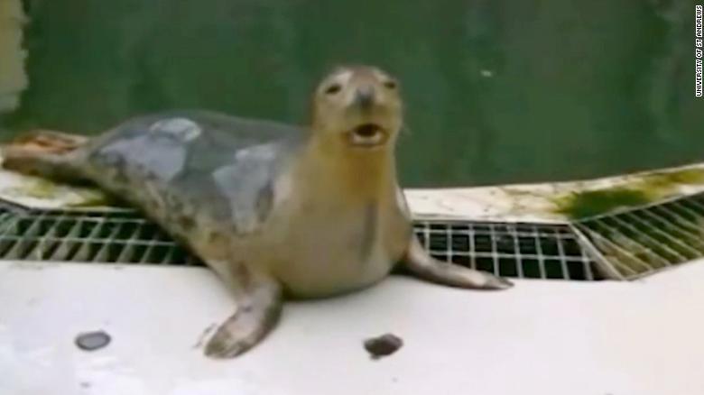 Gray seal sings 'Star Wars' theme