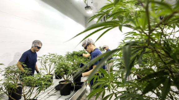 Employees work in the Mother Room at the Canopy Growth Corp. facility in Smith Falls, Ontario, Canada, on Tuesday, Dec. 19, 2017. Photographer: Chris Roussakis/Bloomberg via Getty Images