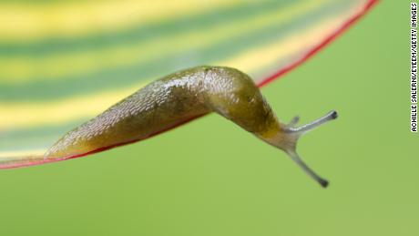 A slug has been blamed for mass delays on a Japan high speed rail network on May 30.
