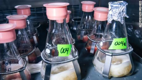 Flasks of soy leghemoglobin — or heme — undergo fermentation inside a shaker at Impossible Foods' research and development lab.