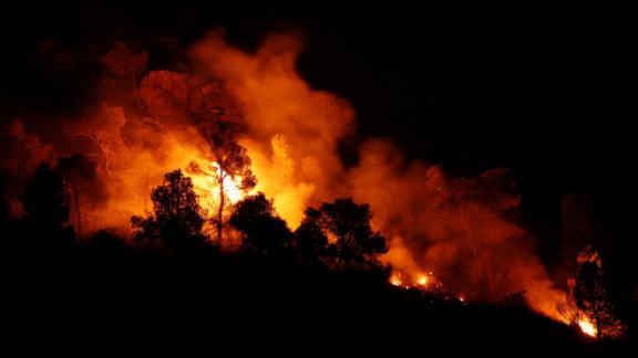 Trees burn during a forest fire near Maials, west of Tarragona, Spain, June 27.