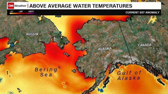 Current sea temperatures around coastal Alaska are pushing 10 degrees above seasonal norms.