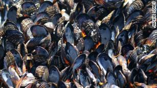 It's so hot that mussels are cooking in their shells and highways are buckling