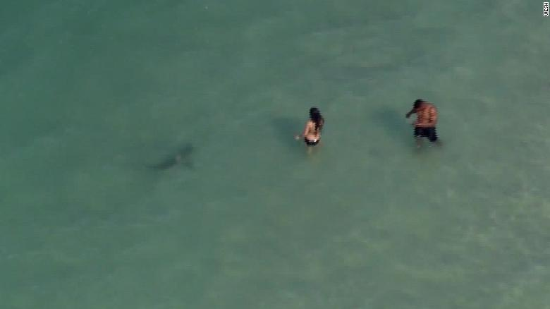 Sharks come within feet of beachgoers