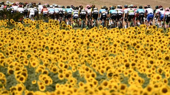 A field of sunflowers provides the perfect foreground as the tightly packed peloton of the Tour de France passes by.