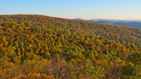 Reforestation could be a powerful tool against climate change, according to a new study. Pictured, Shenandoah National Park in Virginia, October 2013.