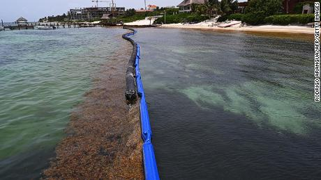 View of a containment barrier to try to keep Sargassum away from the beach of a luxury hotel in Puerto Morelos, Quintana Roo state, Mexico, on May 15, 2019.