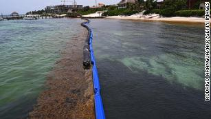 Record-breaking seaweed bloom stretches from west Africa to