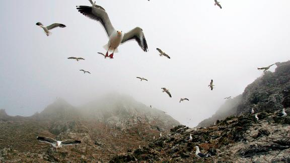 In this file photo from 2006, gulls hover over the rookery at the North Landing area of the Farallon Islands National Marine Sanctuary in California.