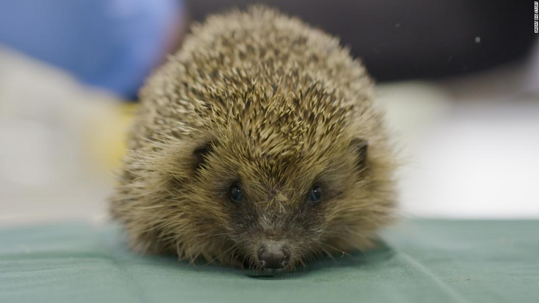 Inside Europe's busiest (and cutest) wildlife hospital