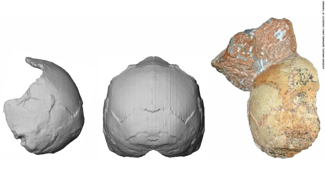 210,000-year-old human skull in Greece is the oldest found outside Africa