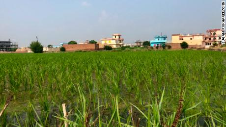 In Hasanpur, a village in the Kurukshetra district in the northern Indian state of Haryana, farming is the main source of income.