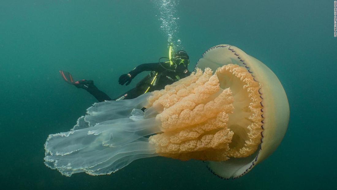 190715144913 giant jellyfish super tease