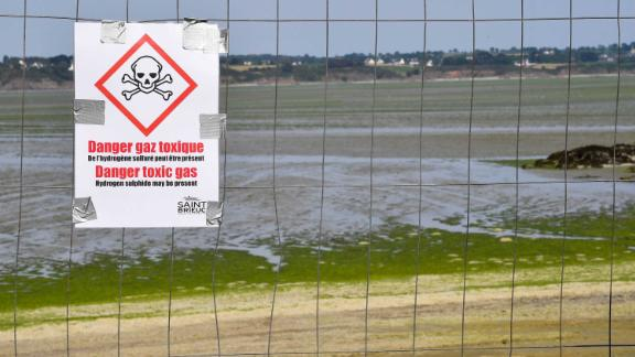 Beaches in the Britanny region have been closed due to concerns over the algae.