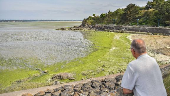 Algae blooms are increasing in size due to climate change, according to one expert.