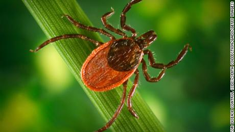 The House of Representatives orders the Pentagon to examine whether ticks were ever used as biological weapons