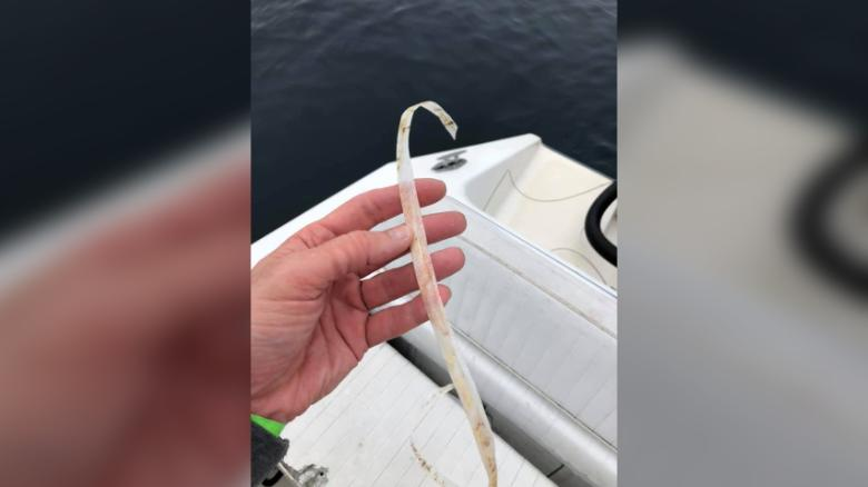 Sulikowski said the plastic is similar to that used on commercial bait boxes.