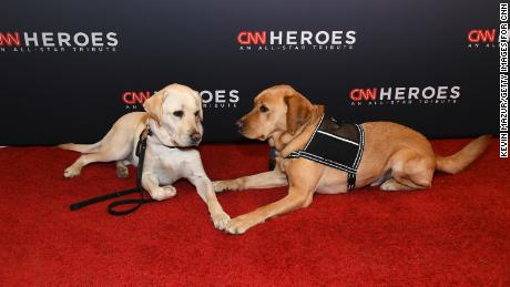 Sully the service dog (L) and Stout's service dog Tom