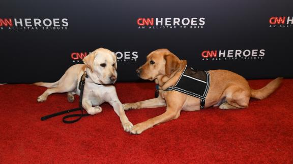 Sully the service dog (L) and Stout