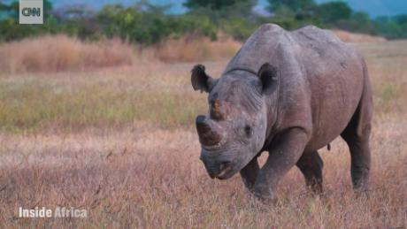 Reintroducing the Black Rhino into the North Luangwa National Park