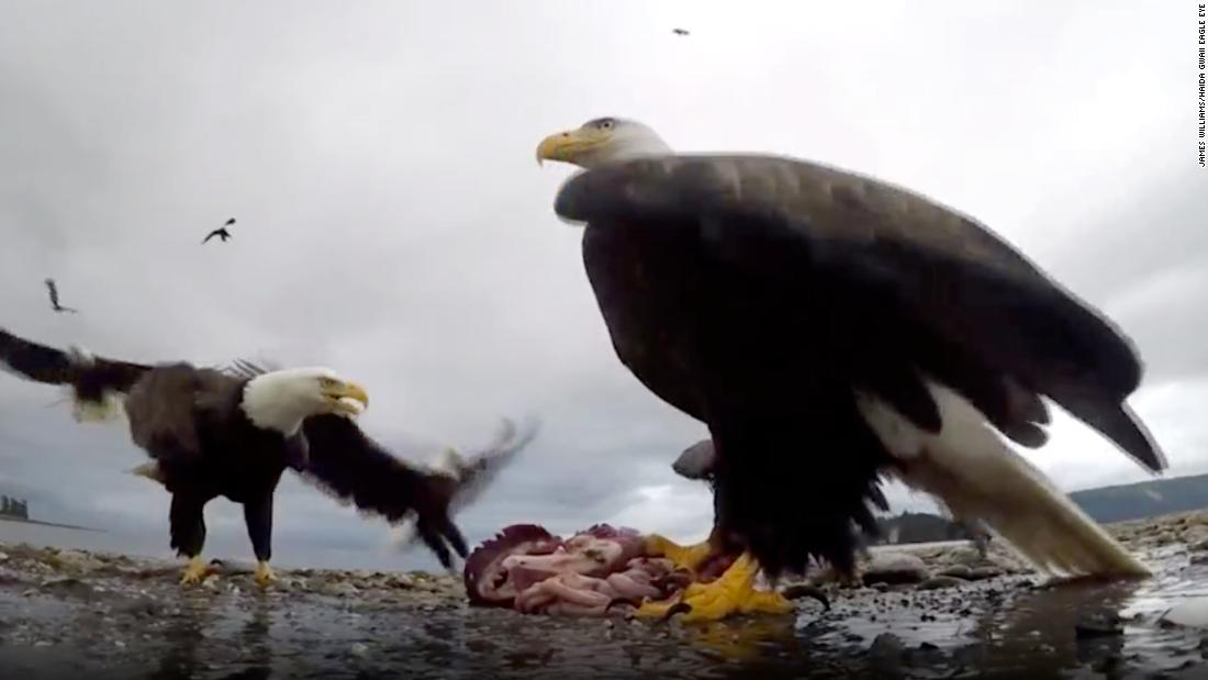 This eagle snatched a GoPro and took it for a ride