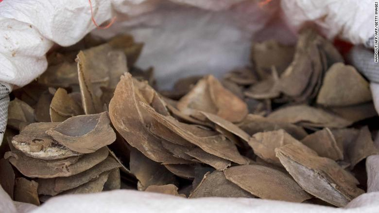 Seized pangolin scales are seen in a sack at a holding area in Singapore in July 2019.