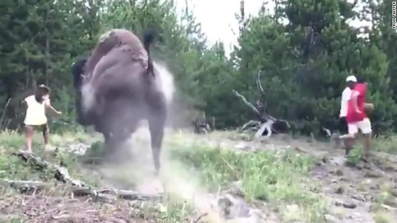 Bison Charges And Injures Girl In Yellowstone National Park
