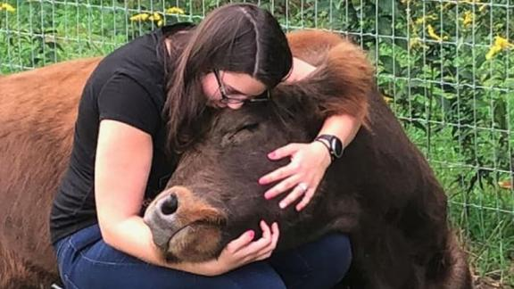 Guests at the Mountain Horse Farm can cuddle a cow for $75 an hour