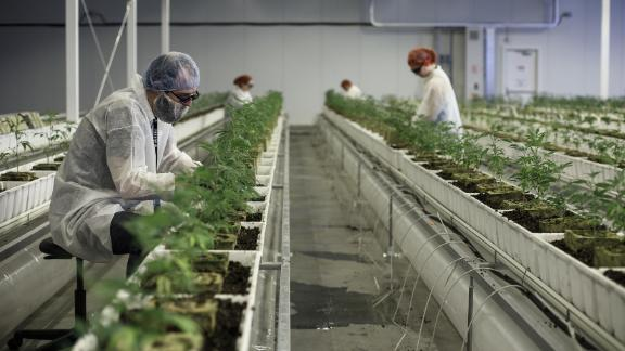 Employees tend to marijuana plants at the Aurora Cannabis Inc. facility in Edmonton, Alberta, Canada, on Tuesday, March 6, 2018. Aurora CEO Terry Booth and his business partner Steve Dobler are the largest individual holders of Canada